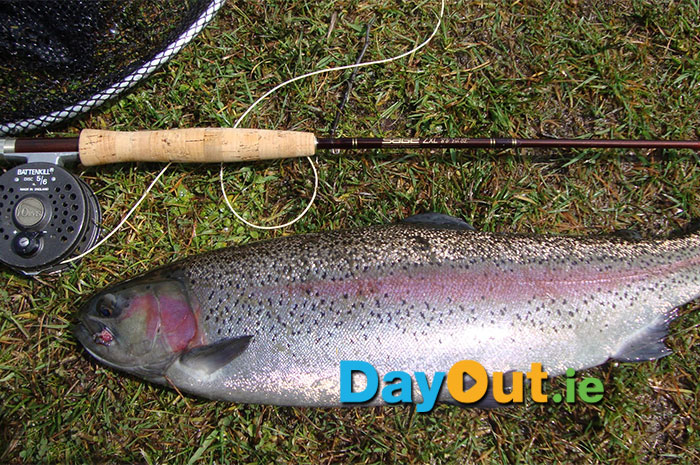 Annamoe-Trout-Fishery-Trout