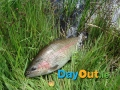 Annamoe-Trout-Fishery-Catch