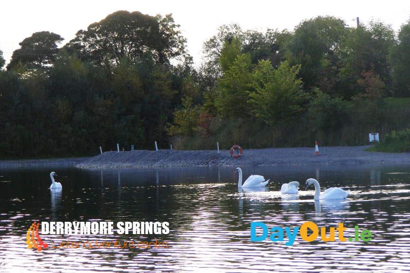 Derrymore-Springs-Swans