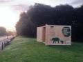 elephants-roam