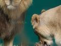 Zuri-Kumar-Dublin-Zoo