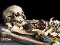 Dublinia-Visitor-Centre---Skeleton