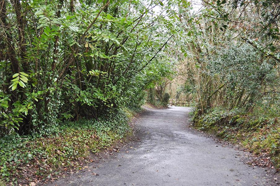 irish-national-heritage-park-walks