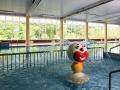 Jacksons-Hotel-Pool