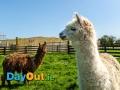 kia-ora-mini-farm-animals