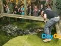 national-reptile-zoo-kilkenny-alligator