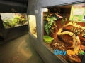 national-reptile-zoo-kilkenny-exhibits