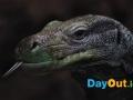 national-reptile-zoo-kilkenny-reptiles