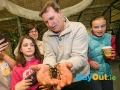 national-reptile-zoo-kilkenny-spiders