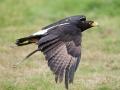 Taytopark-Birds-008