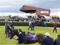 wexford-racecourse-dayout