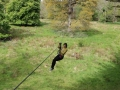 Zipit-Forest-Zip-Line